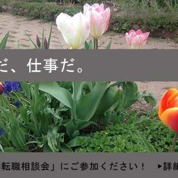 3月23日無料!「アメリカ転職・就職ご相談会」開催!